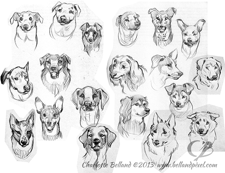 13_01_cbelland_Dog_Faces