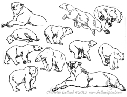 13_03_cbelland_Polar_Bears