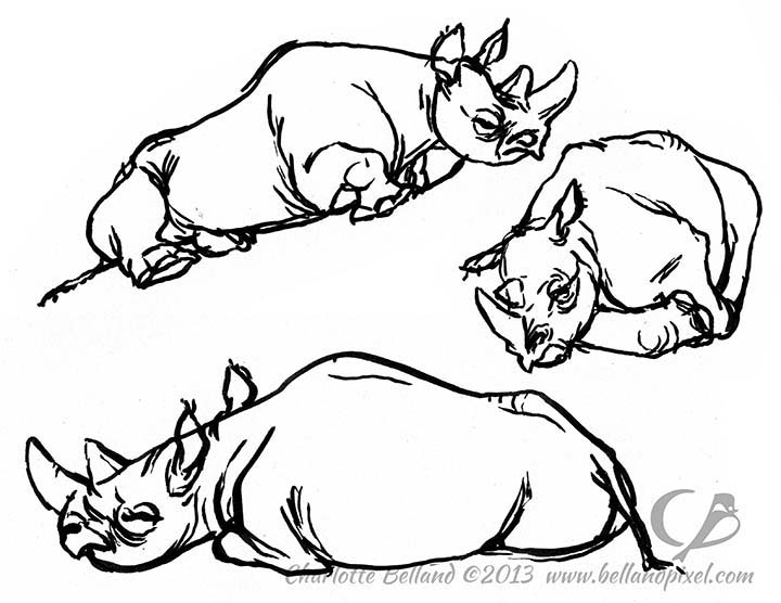 12_26_cbelland_Too_Hot_Rhinos