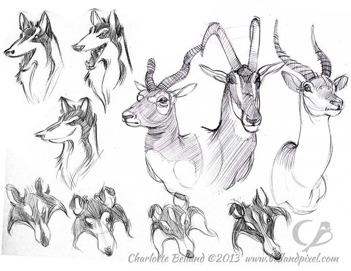 13_21_cbelland_Collies_Antelopes