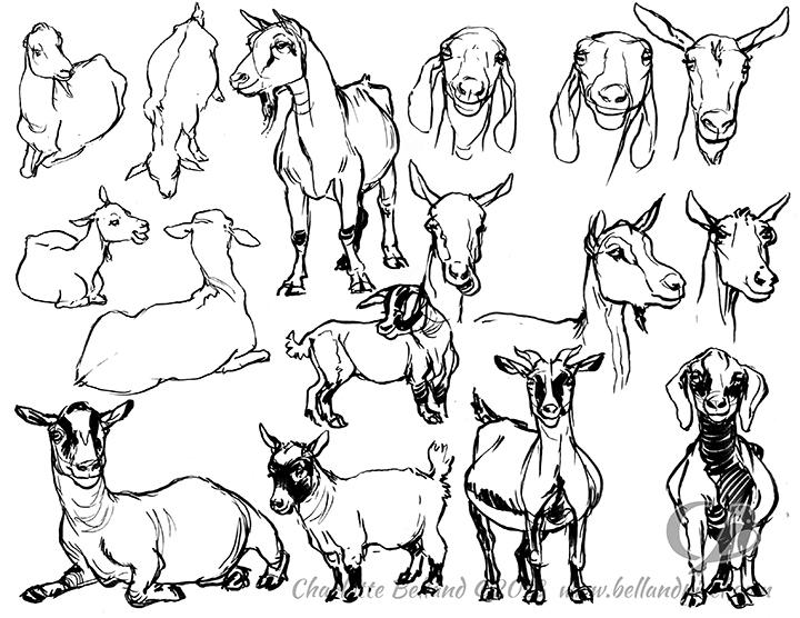 13_33_cbelland_CBusZoo_Goats
