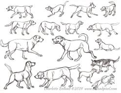 14_07_cbelland_Doggies
