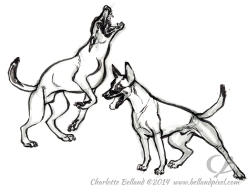 14_12_cbelland_Malinois_Dog
