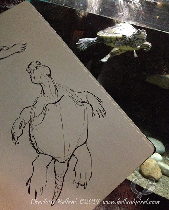 14_22_cbelland_Columbus_Zoo_Turtle