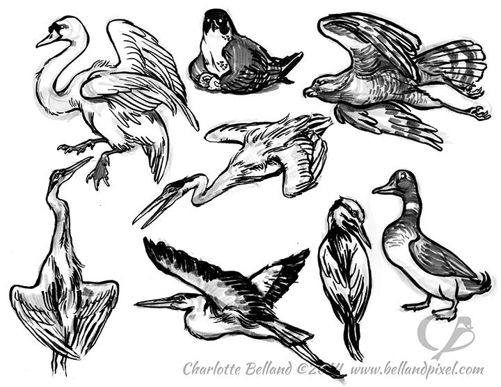 14_25_cbelland_Birds