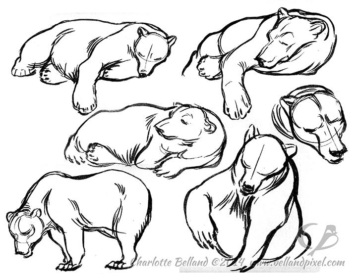 14_28_cbelland_CBus_Zoo_Polar_Alaskan_Bears