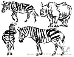14_29_cbelland_CBus_Zoo_Zebras_Rhino
