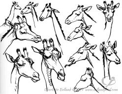 14_30_cbelland_CBus_Zoo_Giraffes