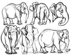 14_31_cbelland_CBus_Zoo_Elephants