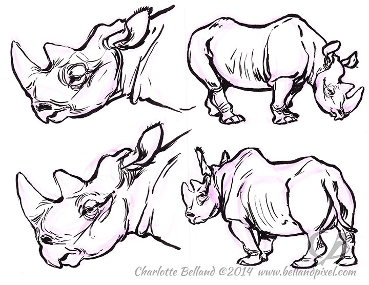 14_32_cbelland_Cbus_Rhino_june