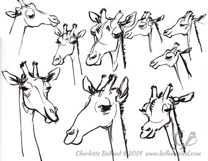14_40_cbelland_Giraffes_CBus_Zoo
