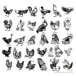 bellandpixel_Inktober_2014_Chickens